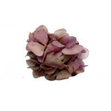 Broche de Flor preservada Hortensia Lila Vintage