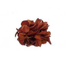 Broche de Flor preservada Hortensia Marrón Tierra