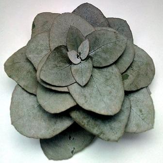336×336 broche eucalipto